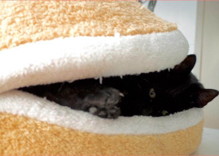 Lucy in haar kattenburger