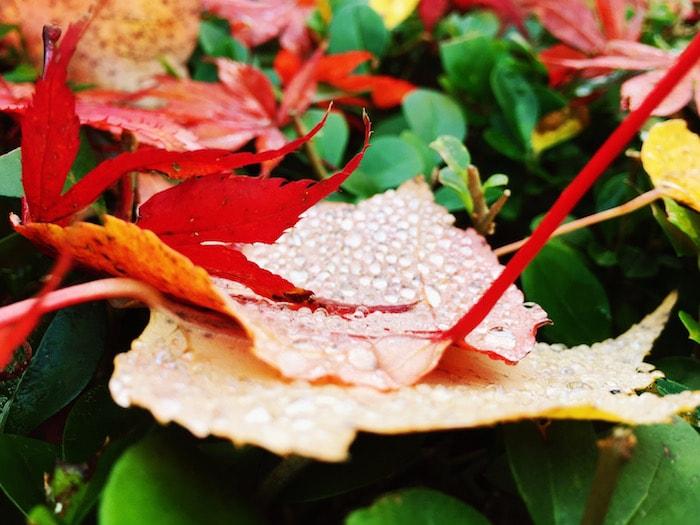 Herfstbladeren in Arnhem