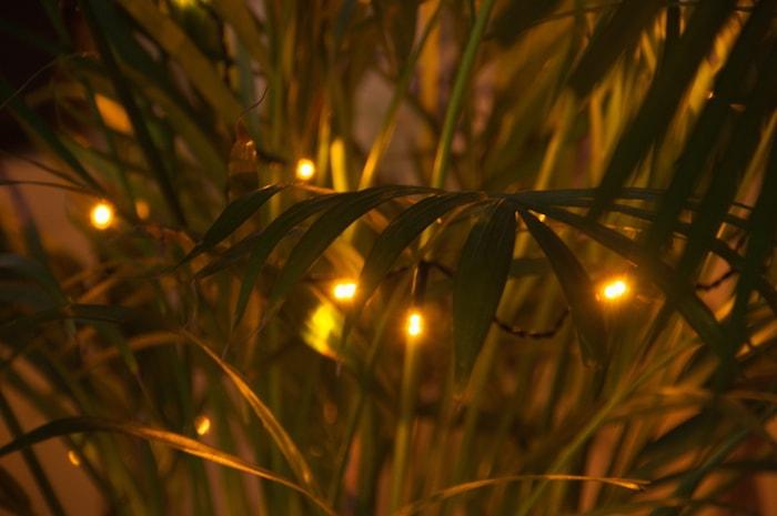 Plant met kerstlampjes