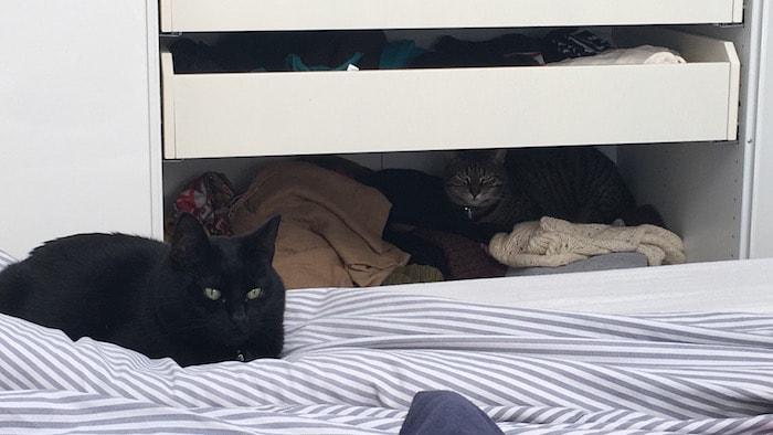 Ayla loves life maart 2017 - Katjes tijdens het inpakken